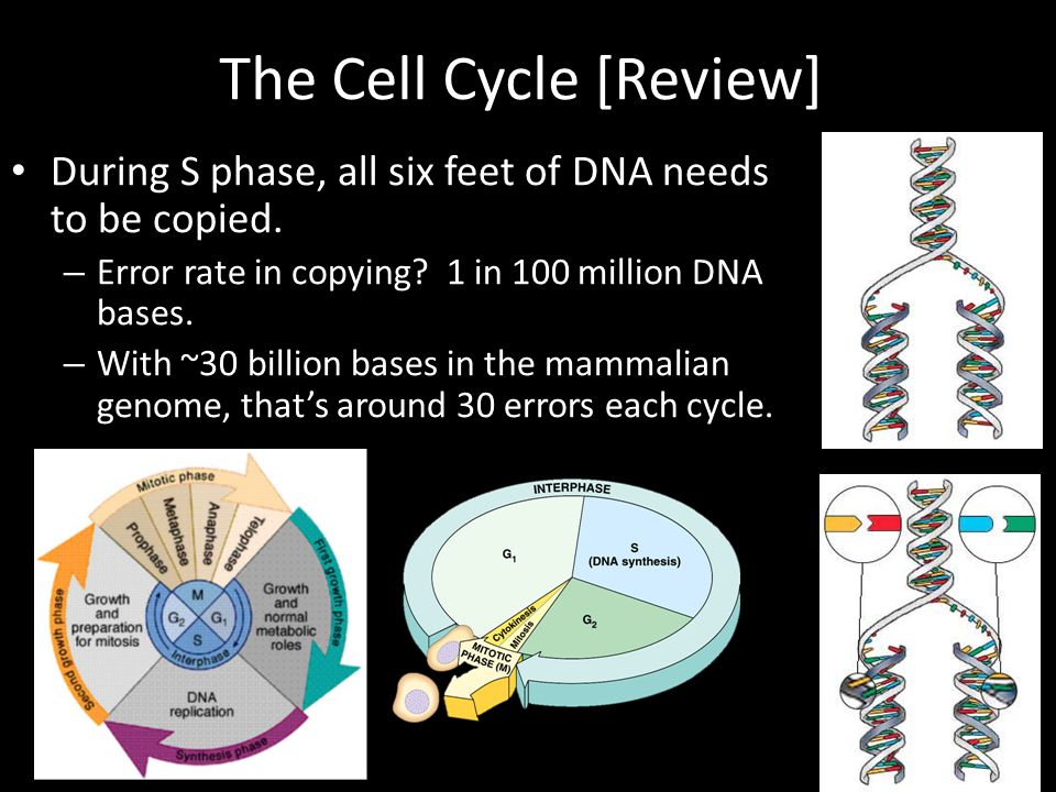 The Cell Cycle [Review]